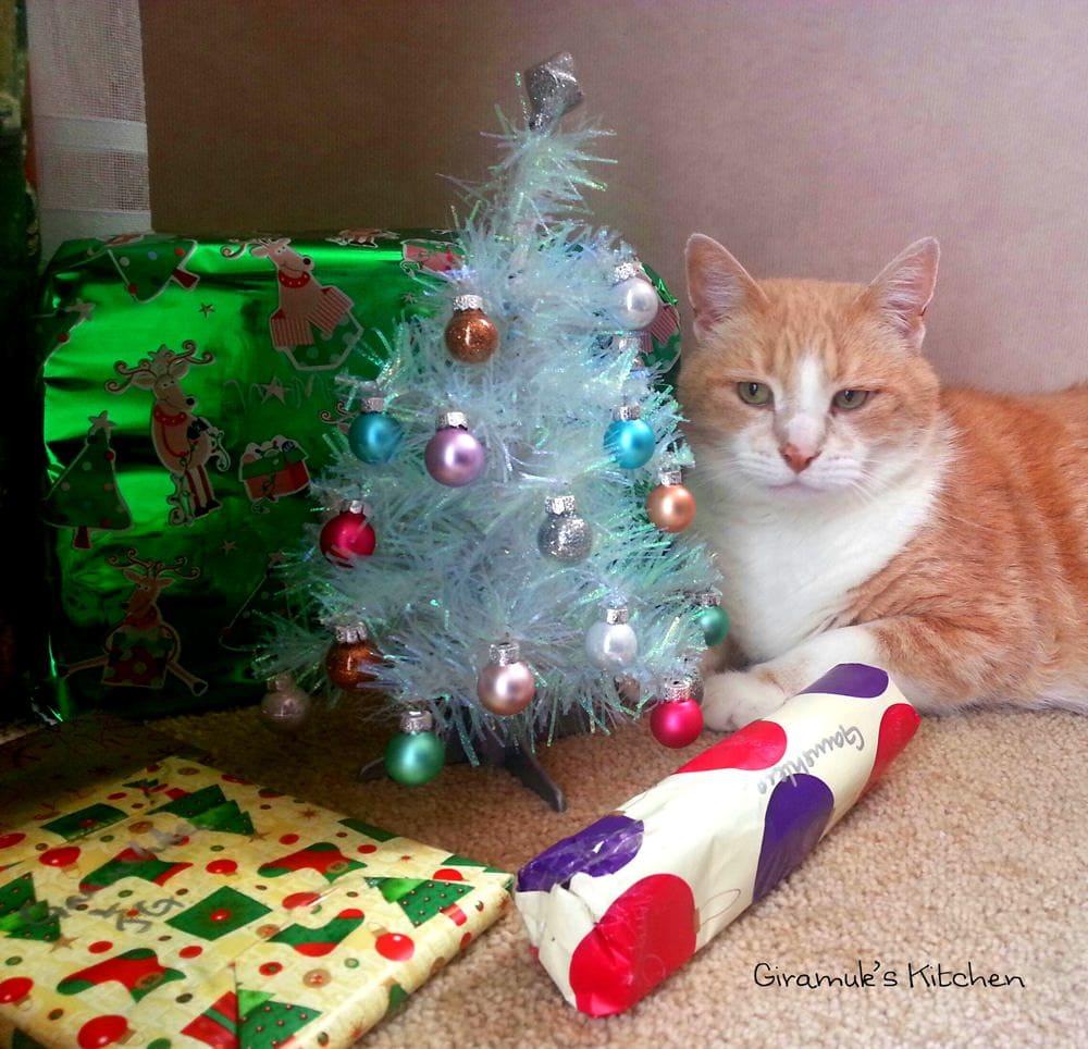 Sam with the Christmas Tree