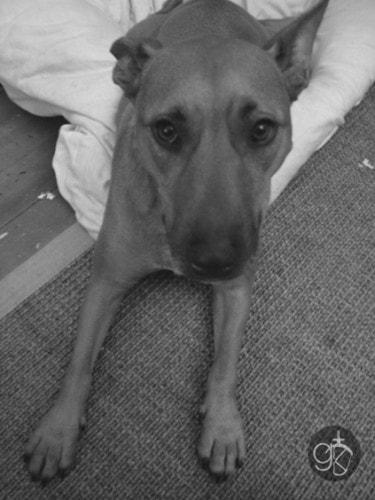 Zoey - 2009
