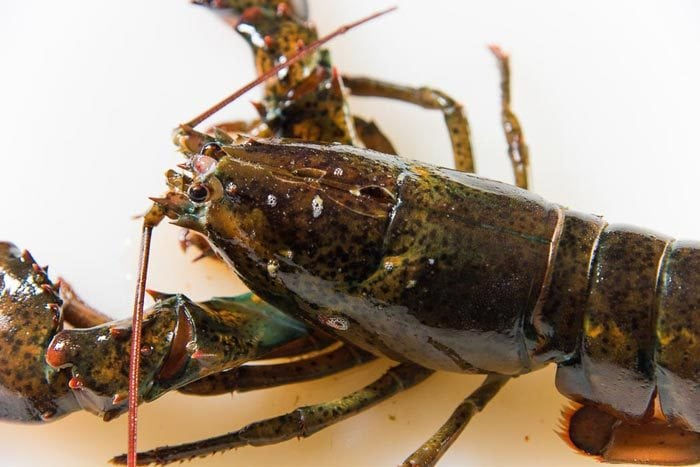 A lobster with the knife cut through the head, humanely killed.