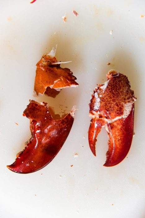 A lobster claw meat, taken out whole from the claw shell.