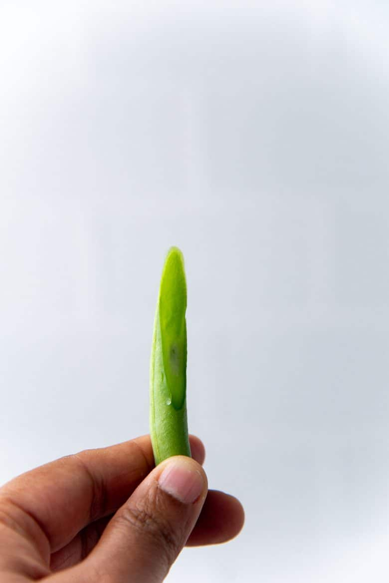 A single cut green bean